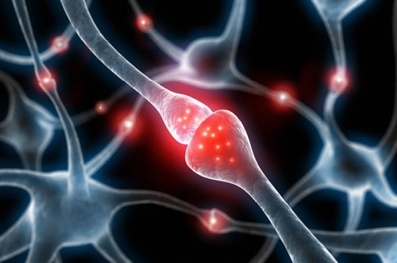 Hersenen En Dna Veranderen In De Ruimte Pfizer
